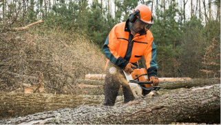 Logging and Chainsaw Safety